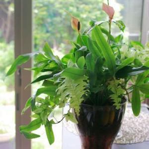 ガラスに植えた観葉植物