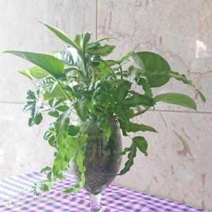 グラスに植える観葉植物