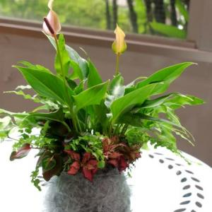 苔玉巻きの観葉植物
