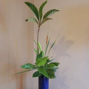 ビワの瓶花