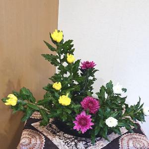 菊三種盛り
