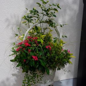 パンドレアと夏の寄せ植え、その後