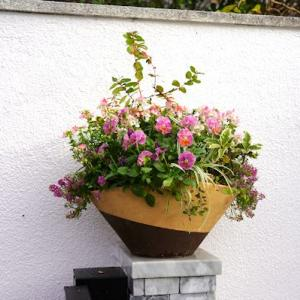 楕円鉢のネメシアとビオラ