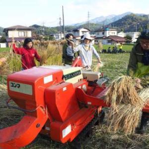 自然農&稲刈り・脱穀編 レポート2 手づくり循環生活体験会