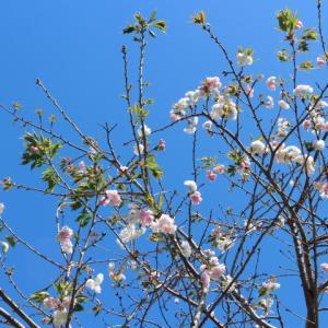 夏が待ち遠しい!オークランドの長い春