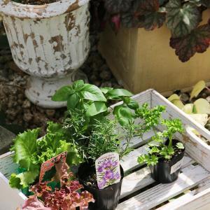 「食べる寄せ植え」に最適な季節です。
