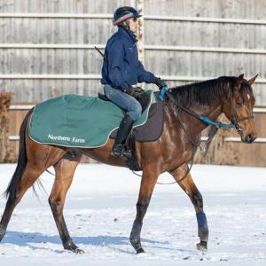 コケレールの2019の馬名決定【エフジーノット】