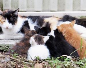 ◆今日から節約(子猫発見)