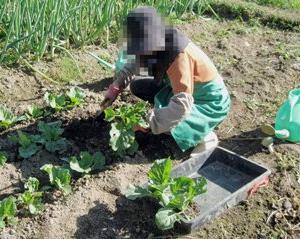 ◆春用の野菜を植える