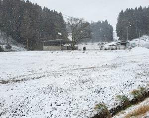 ◆雪降った~♪