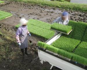 ◆田植えの手伝い