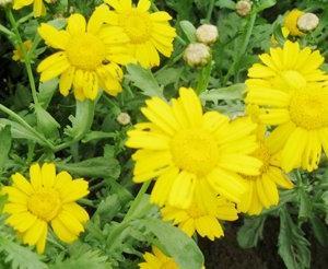 ◆畑に咲く花