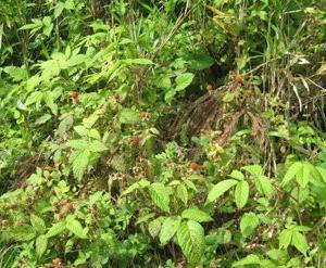 ◆野のフルーツ