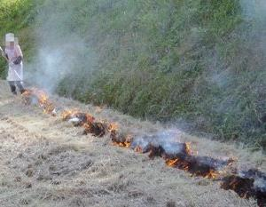 ◆藁に火をつけファイア~