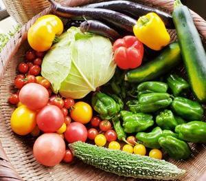 ◆野菜ぱくぱく