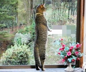 ◆胴長短足(愛猫)