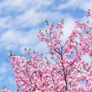 お花見シーズンなのに、でも油断は禁物。節度ある行動をね!