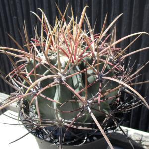植物祭➁『イイモノコレクション』オフィシャルブログ