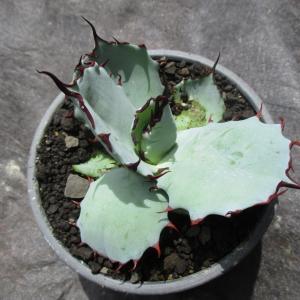 植物祭⑧(第2部-➁)『イイモノコレクション』オフィシャルブログ