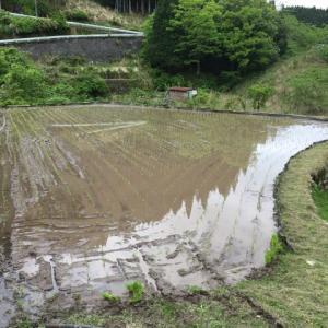 つく米の棚田の端くれ田植え終了