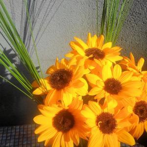 こんな時だからヒマワリの生け花とアレンジメント♪
