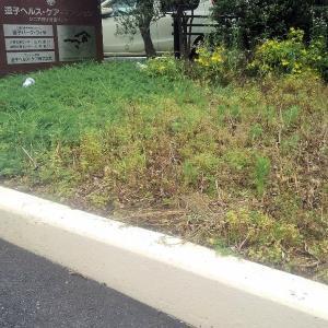 チューリップの掘り上げとガザニアの植栽