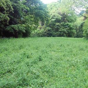 鎌倉の杜の草刈作業
