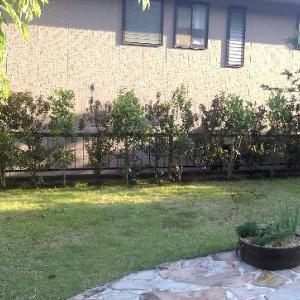 春の植栽~生垣~イロハモミジ~サツキ