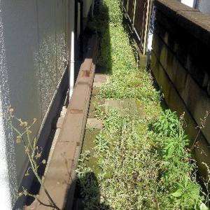 裏庭と犬走りのコンクリート打設