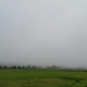 朝霧の中のウォーキングでした。