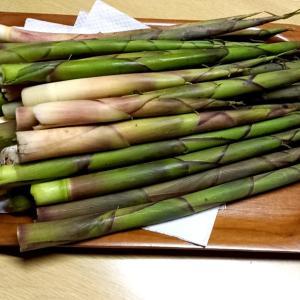 「根曲がり竹」をいただきました。