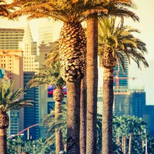 Las Vegasへの寄付活動について