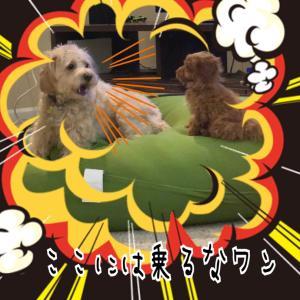 【ペット詐欺後⑬】仔犬の名前♡発表♡