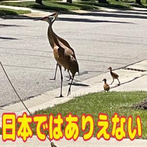 東京では絶対ありえない・・・・