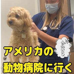 【コロナ規制緩和】1年半ぶりに獣医に面会できた
