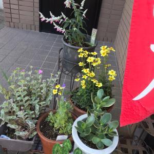 オアシス自宅サロン11 月の新メニュー