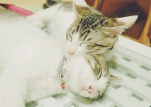 猫の写真を見るだけで、生産性が44%アップする?!