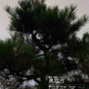 2019年10月15日(火)午前7時の気温16.0度、湿度78%、ぱらりと雨降り鳥取市滝山の朝です。