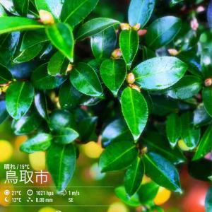 2019年10月20日(日)午前7時の気温19.2度、湿度74%、薄曇りで迎える鳥取市滝山の朝です。
