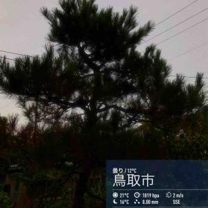2019年10月21日(月)午前7時の気温13.2度、湿度84%、どんより曇空で迎える鳥取市滝山の朝です。