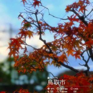 2019年2019年11月16日午前8時の気温9.4度、湿度68%、少し晴れたり曇ったりで迎える鳥取市滝山の朝です。