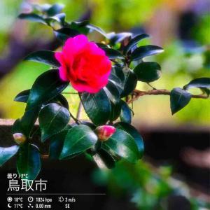 2019年11月17日(日)午前8時の気温10.1度、湿度71%、秋晴れで迎える鳥取市滝山の朝です。