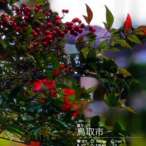 2019年12月7日(土)午前8時の気温3.1度、湿度69%、雨上がり曇り空で迎える鳥取市滝山の朝です。