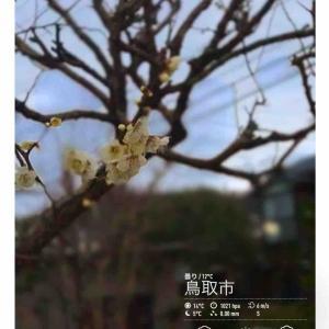 2020年2月22日(土)午前6時の気温12.2度、湿度66%、鳥取市滝山の夜明け直前です。