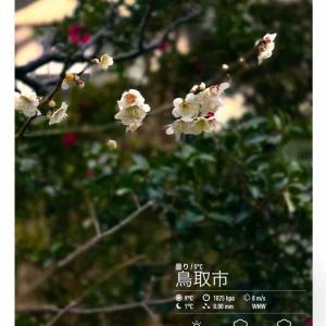 2020年2月23日(日)午前6時の気温7.2度、湿度60%、曇り空で迎える鳥取市滝山の朝です。