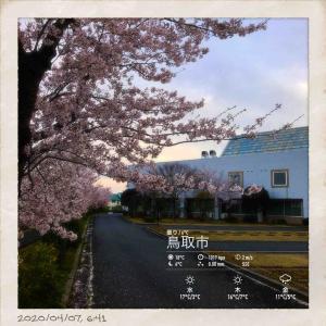 2020年4月7日(火)午前6時の気温4.4度、湿度8%、桜満開で迎える鳥取市若葉台の朝です。