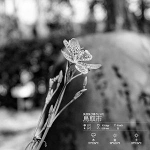 2020年8月12日(水)午前7時の気温27.0度、湿度84%、薄曇りで迎える鳥取市滝山の朝です。 写真は先日のヒオウギ(因幡万葉歴史館・庭園)です。