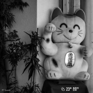 2020年8月22日(土)午前5時の気温23.5度、湿度92%、鳥取市滝山の朝です。写真は過日の若桜街道で見かけた招き猫です。