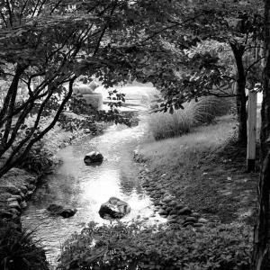 2020年8月25日(火)午前6時の気温23.0度、湿度92%、宮崎の朝です。 写真は暑さの中にも涼しさ感じる因幡万葉歴史館庭園の一コマです。