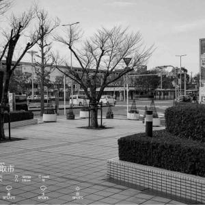 2020年10月22日(木)午前7時の気温15.9度、湿度64%、雨降りで迎える鳥取市滝山の朝です。 写真は過日の鳥取駅前の一コマです。